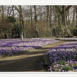 Voorjaars tapijt