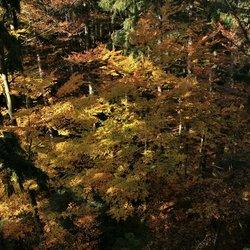 Herfstsfeer  Lúsen 2