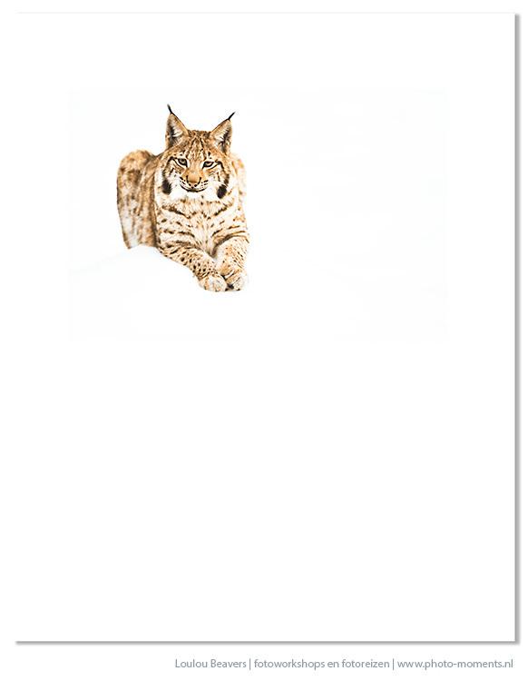 Lynx in het Beierse woud - het zal duidelijk zijn..ik kijk uit naar de winter en alles wat het in petto heeft. Hoe cool is het toch om in nature'