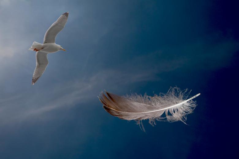 vogel en veer