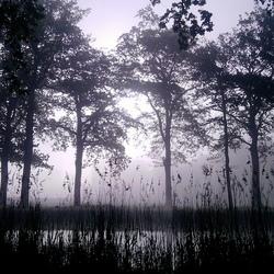 Kanaal in de vroege ochtend