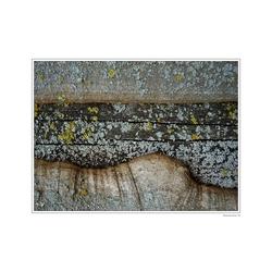 Treetail