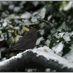 beetje winter in NL