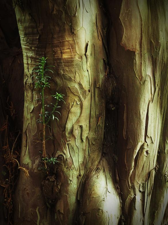 boomstructuur - Soms vind ik de structuur van zo'n stam de moeite waard