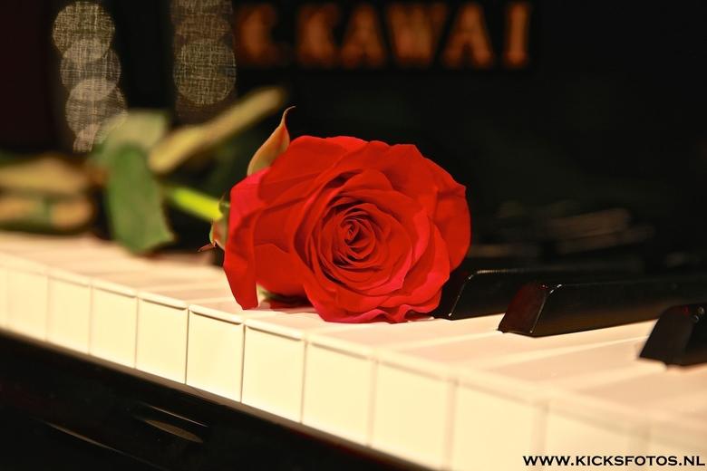 Flower of Music  - een rode roos op de toetsen van de vleugel van Cor Bakker na afloop van zijn theater optreden samen met alderliefste
