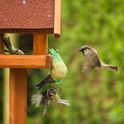 Vogelen in eigen tuin