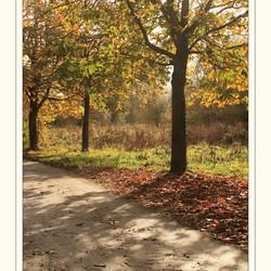 Herfst in het bos V