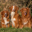 Tollers