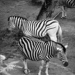 Zwart/Wit en Wit/Zwart.......