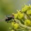 Alice Cooper, halo of flies