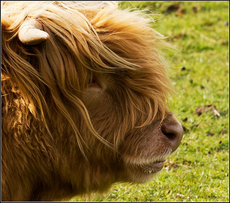 Highlander onbewerkt - Voor degene die hem 'puur' willen zien