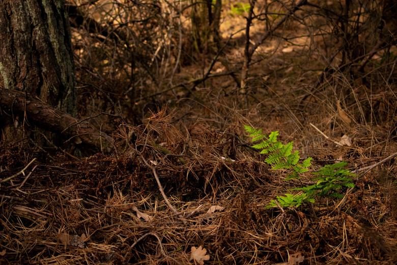 Groen in de Herfst -