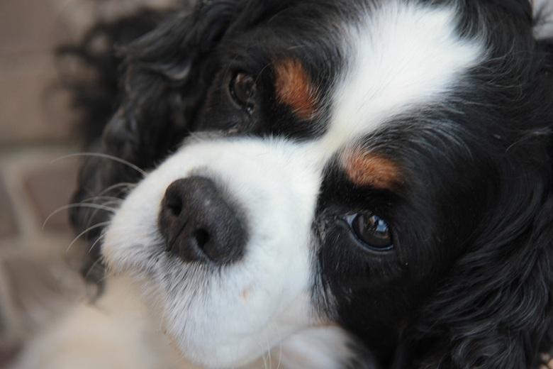 Banjer - Oefenen, oefenen, oefenen en veel gedult met deze hond. Ik hoor graag tips om dieren goed te kunnen fotograferen.