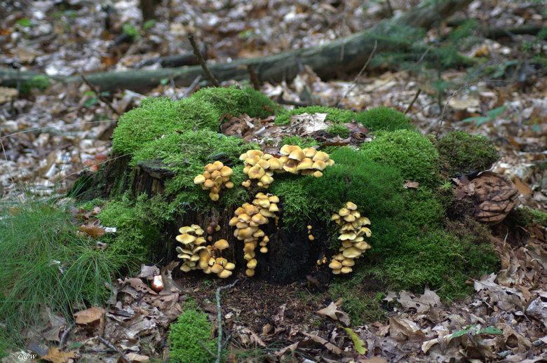 paddenstoeltjes op mos - echt tijd voor leuke dingen