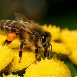 A Bee Days' Work