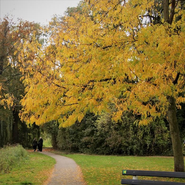 herfst - wandeling in het park <br /> momentje van rust <br /> in roerige tijden<br /> 17-10-2020