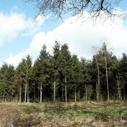 Tree's by maarten