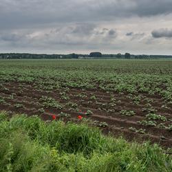 Oer polderland..
