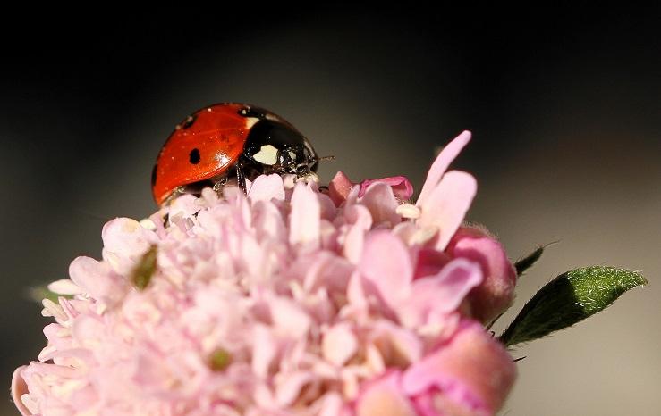 Zijn de kleine dingen die je moet waarderen - Middagje in de achtertuin, dan maar op zoek naar een lieveheersbeestje, blijven toch mooi