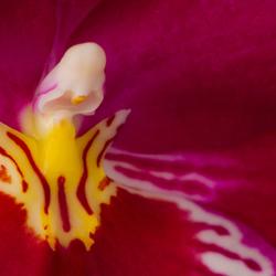 Orchidee...........