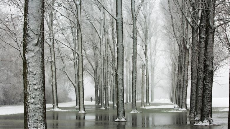 Winter in het Park - De bomen in het park doorstaan de winterse omstandigheden