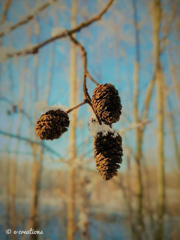 Zonnig winters plaatje -