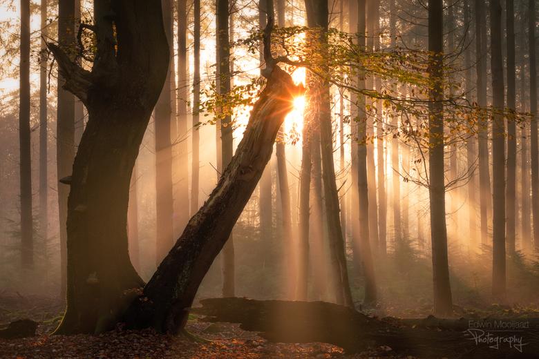 A Touch of Light - Een mooie herfstochtend in het Speulderbos