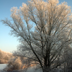 Hollandse winter 2