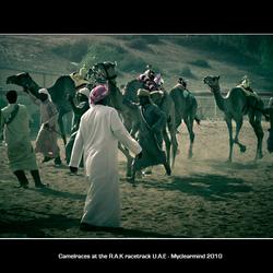 Camelraces at the Ras al Khaimah racetrack