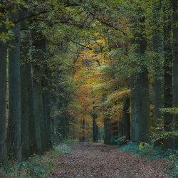 forestlights