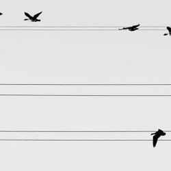 the bird song