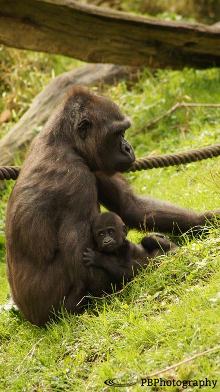 Moeder en kind -