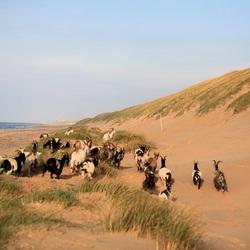 Wilde dieren op het strand..