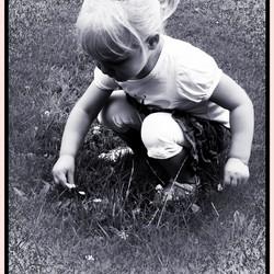 meisje dat bloempjes plukt