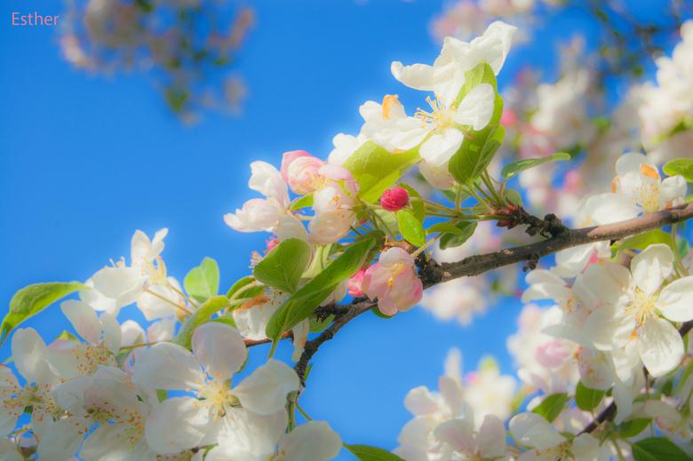 Sweet little blossom -