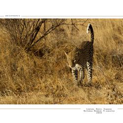 Leopard 2, Kenia