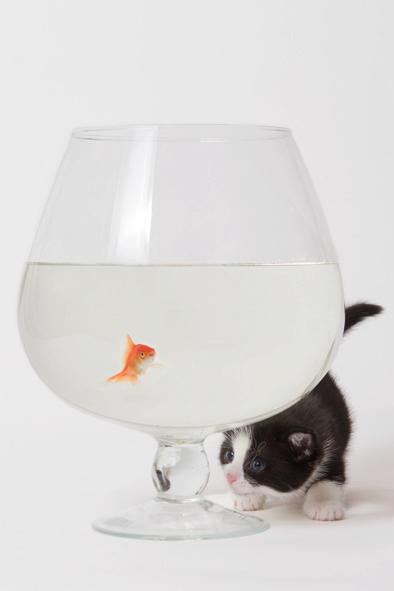 kleine met visje - klein kittentje vind het visje wel erg leuk