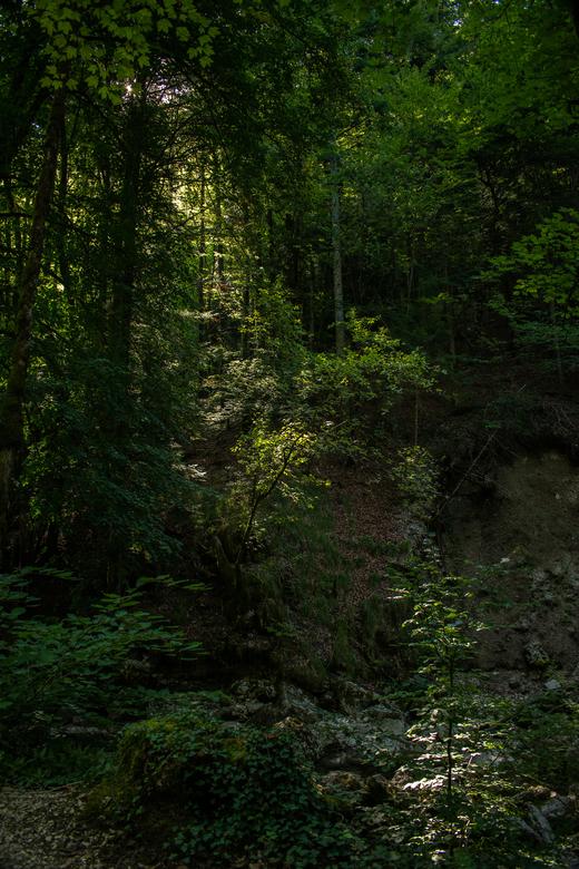 Mooi licht. - Bos in Frankrijk.