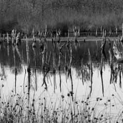 Bargerveen - mysterieus meer met afgestorven bomen