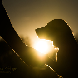 Zonsondergang met je trouwe viervoeter