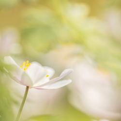 De bloemetjes buitenzetten