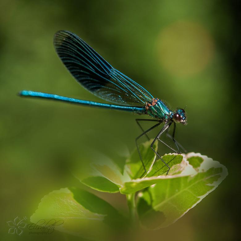 blue lady -