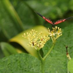 Vlinder in Vlindorado
