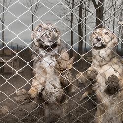 honden in asiel