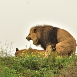 Wildlands Wildlife Emmen