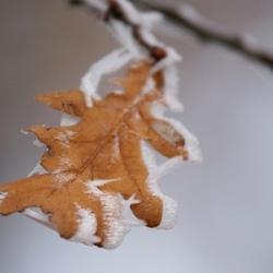 herfst of winter...