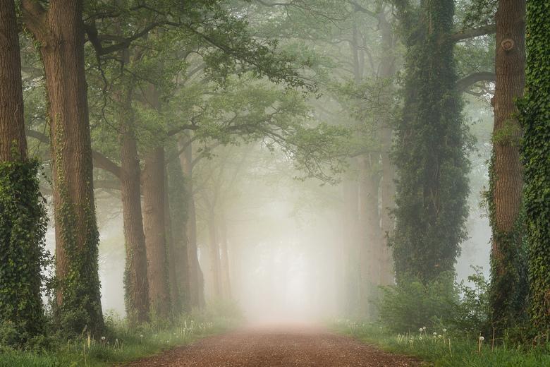 Natural Green - Een bospaadje op een vroege, mistige morgen in het voorjaar.