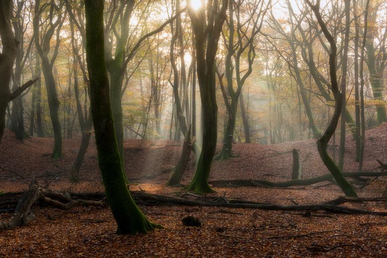 Autumn Forest - Mistige condities en een helder doorbrekende zon zorgden voor deze prachtige condities tijdens mijn bezoek aan het Speulderbos.