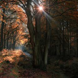 Bos bij Sint Nicolaasga Friesland