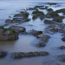 Lonely Gull (herzien)